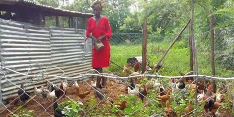 Is Chicken Farming Profitable in Kenya