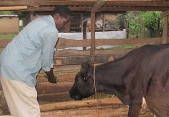 Dairy Farming Challenges