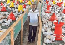 Sheikh Commercial Poultry Farm