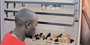 Chicken Farming Capital