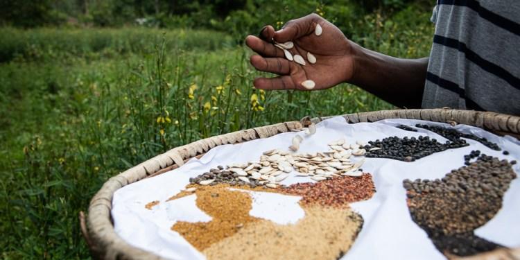 Diverse seeds at the farmer run seed bank at Vihiga - Bizna Kenya