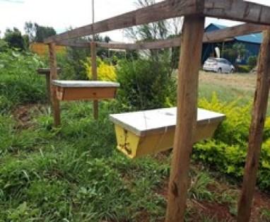 Kenya Top Ber hive - Bizna Kenya