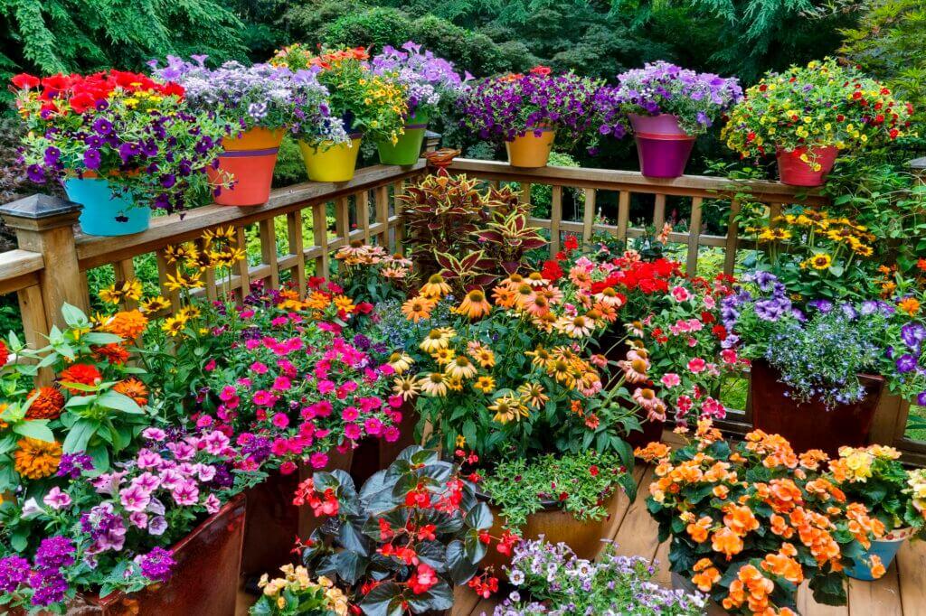 کسب و کار در کشت گل در خانه