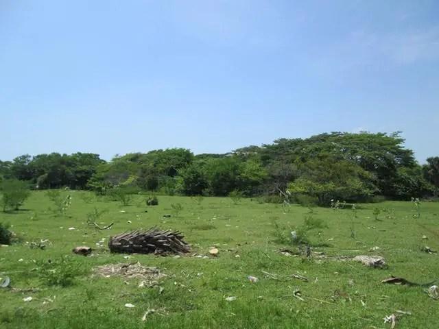 Vacant residential / agricultural land for sale in black river st elizabeth