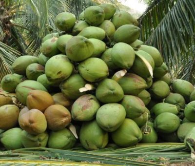 Coconut Producers Association Calls For FG's Support To Meet Local Demand