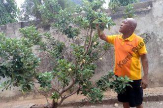 Nigerian Apple Farmer