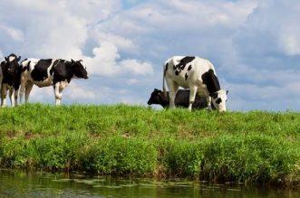 Milk Exportation to China