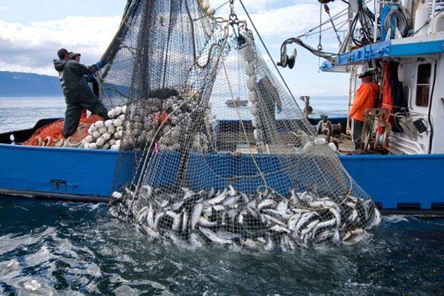 Nigeria Depends On Foreign Markets To Supply 2.2 million To Of Fish Annually