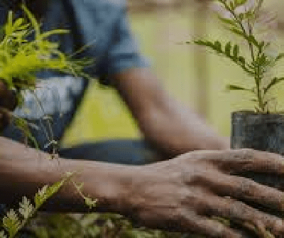 FG to Plant 35 million Tree Seedlings