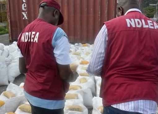 NDLEA Seizes 1721kg Of Cannabis Sativa In Kaduna