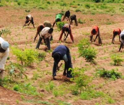 Avoid Hasty Planting With Recent Rainfall, NiMET Advises Northern Farmers