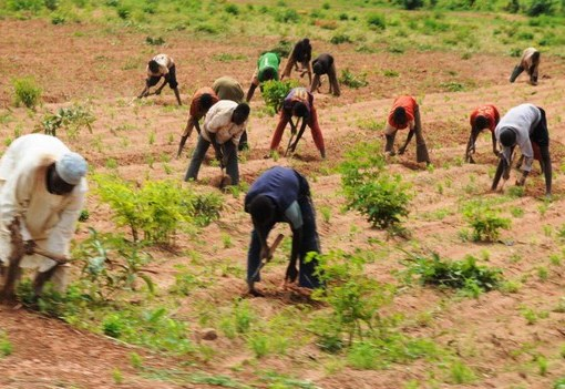 AfDB, IFAD, Others Boost Food Production With $800m