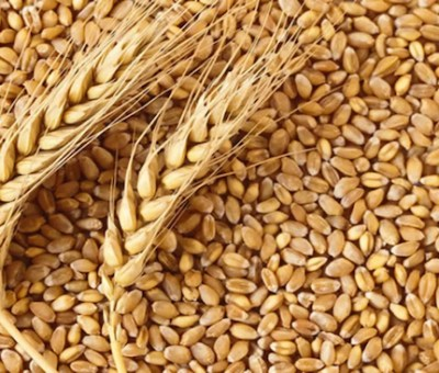 Nigeria's Wheat Value Chain's Growing Importance To Job Creation, Food Security