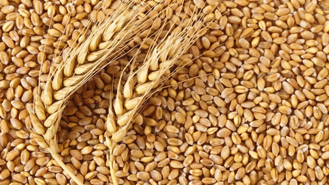 Experts Warn Of An Impending Food Crisis, Canvass Support For Flour Milling Industry