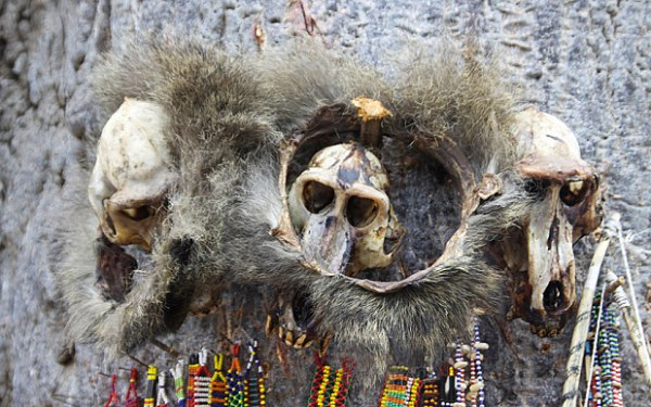 Africa, Tanzania, Lake Eyasi, ornamental skulls and beads used by the local witch doctor