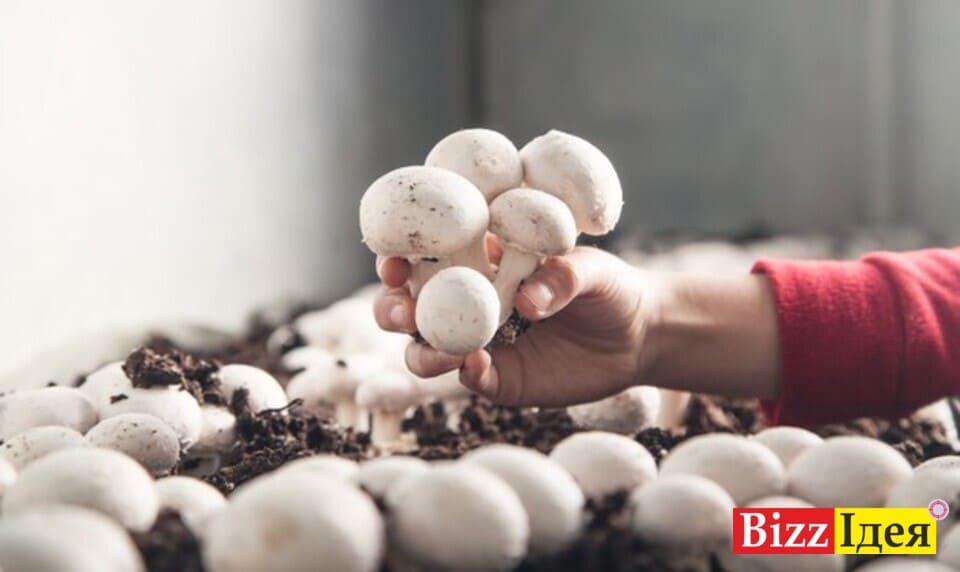 Вирощування грибів як бізнес