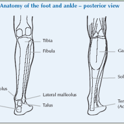 Joints Of The Foot Diagram Fuzz Face Wiring Ankle Global Alliance For Musculoskeletal Health Pp Back B 1