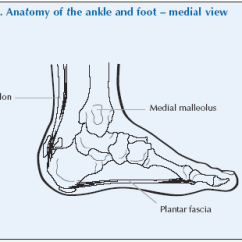 Joints Of The Foot Diagram 2008 Kia Spectra Radio Wiring Ankle Global Alliance For Musculoskeletal Health There Are Some Special Terms That Relate To Movement These Inversion Which Means Lifting Medial Border And Eversion
