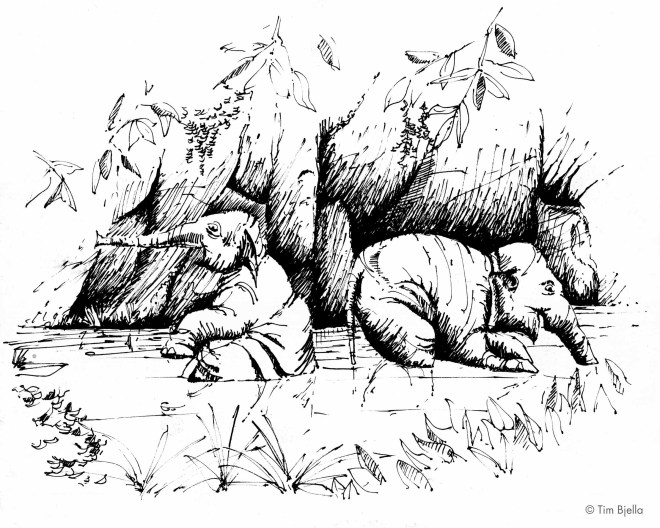 Tim Bjella Sketch