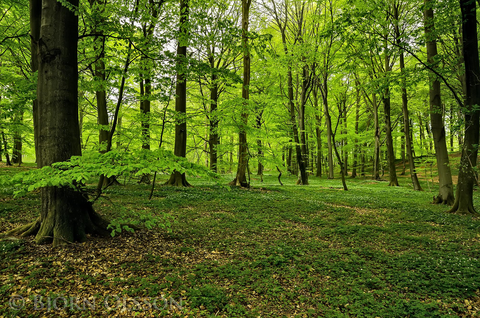 Nature Walk   Bjornsphoto