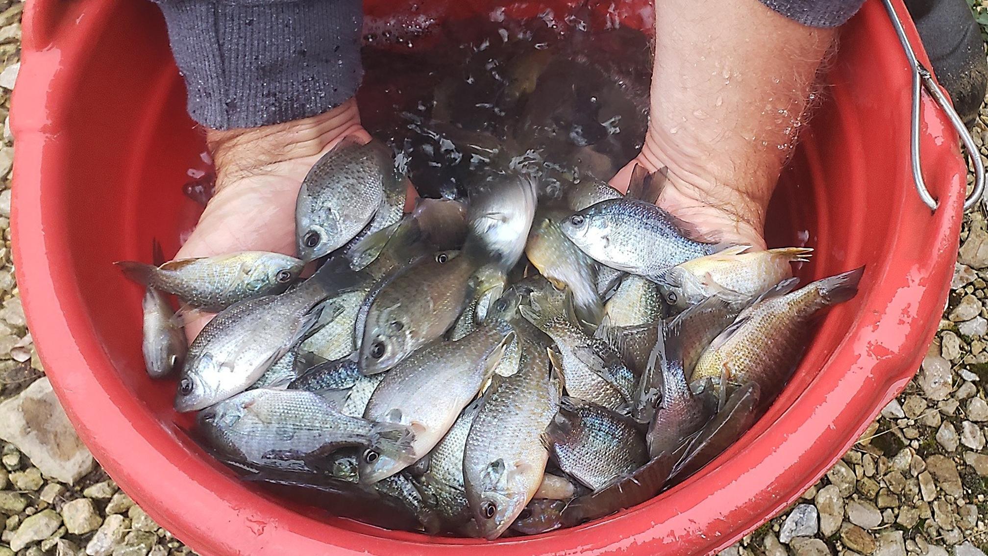 Fish Stocking