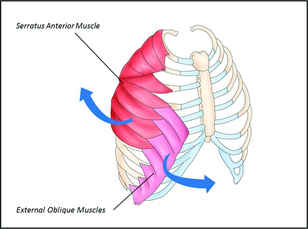 diagram of tibia stress fracture 4age alternator wiring imaging rib fractures in elite rowers the promise download figure