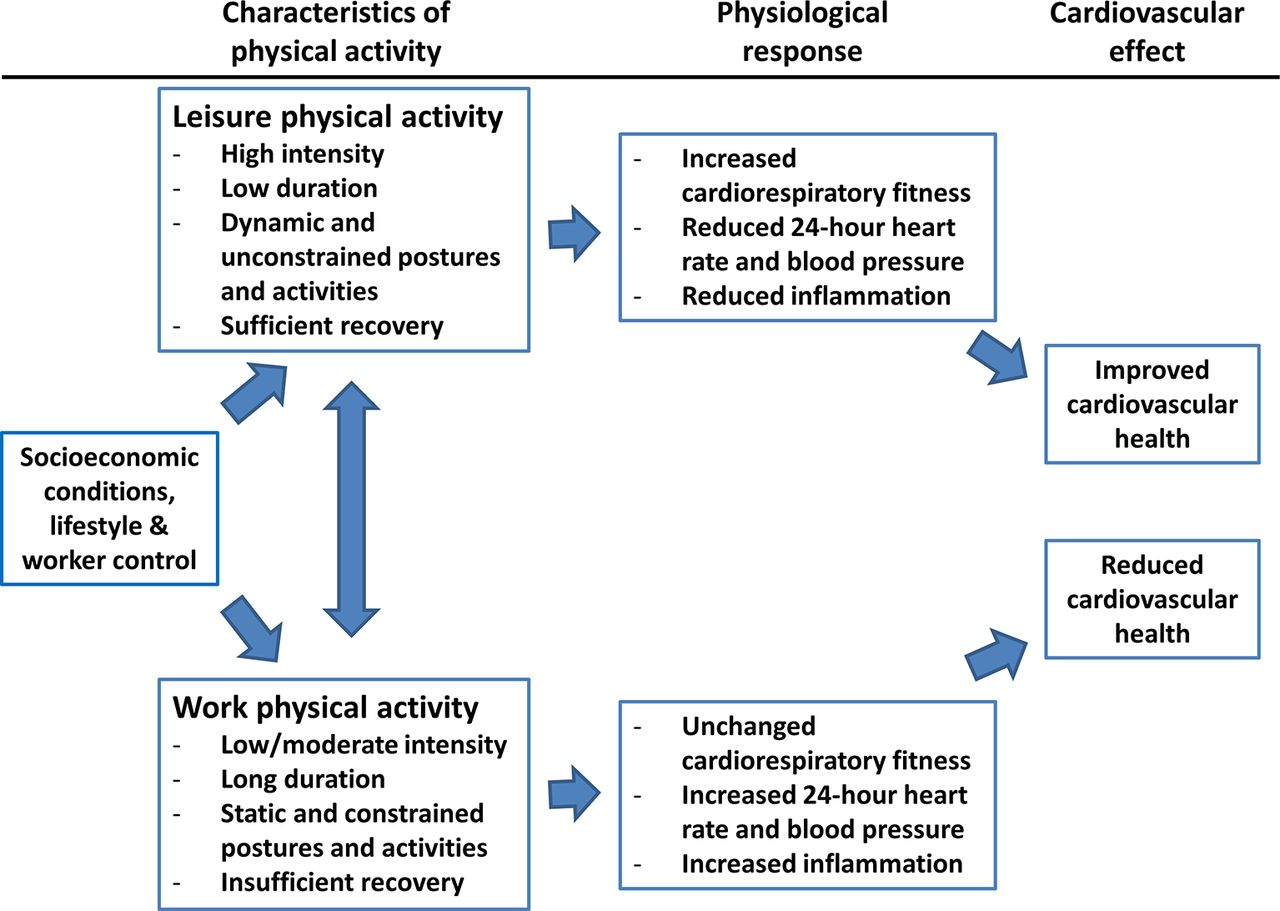 The Physical Activity Paradox Six Reasons Why Occupational Physical Activity Opa Does Not
