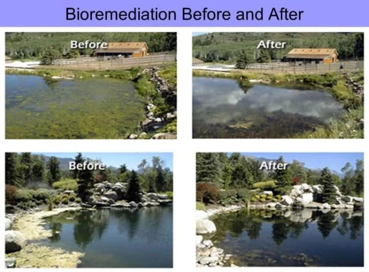 Bioremediation water disruption