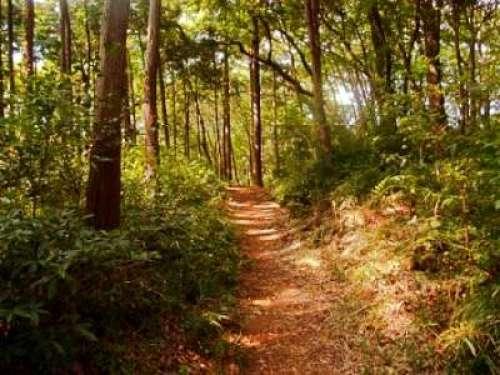 埼玉の遊び場⑤映画のモデル!狭山丘陵 トトロの森