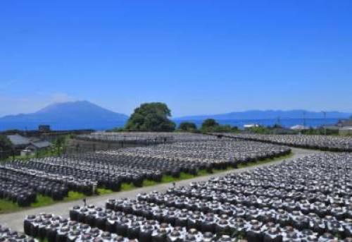 鹿児島お土産⑩健康志向の方へ 黒酢