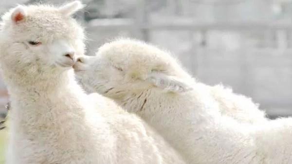 滋賀のデートスポット特集★地元民おすすめ10選 滋賀農業公園 ブルーメの丘