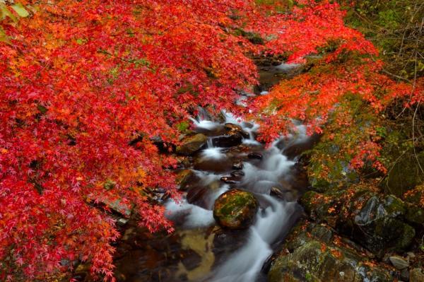 茨城県紅葉名所⑧滝を流れるもみじが美しい!花園渓谷