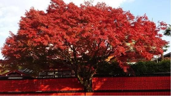 京都絶景撮影スポット⑩紅葉の名所として有名!車折神社