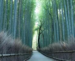京都は嵐山の絶景「竹林の道」観光前に知っておくべき10の事
