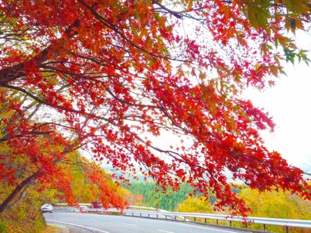 那須の紅葉名所⑨高原のドライブも楽しめる「日塩もみじライン」