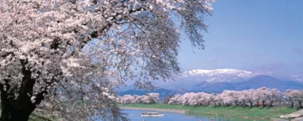 宮城県の桜の名所&見ごろ時期①電車からも川の上からも!白石川堤一目千本桜