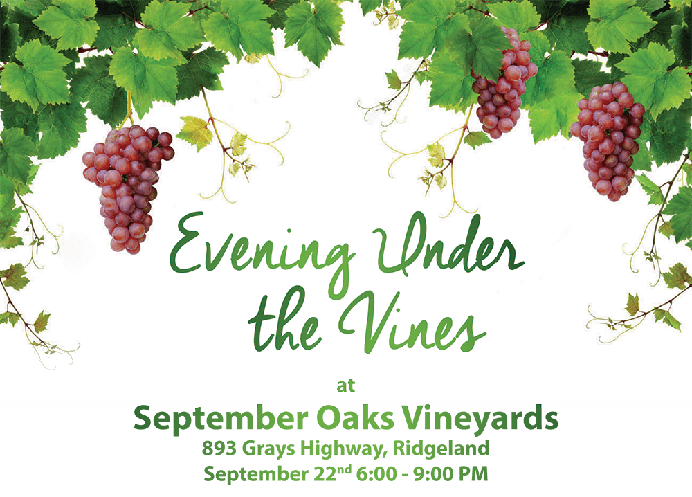 Evening Under the Vines 2016-3