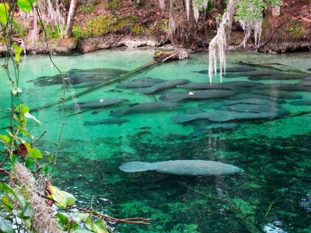 blue spring kayaking