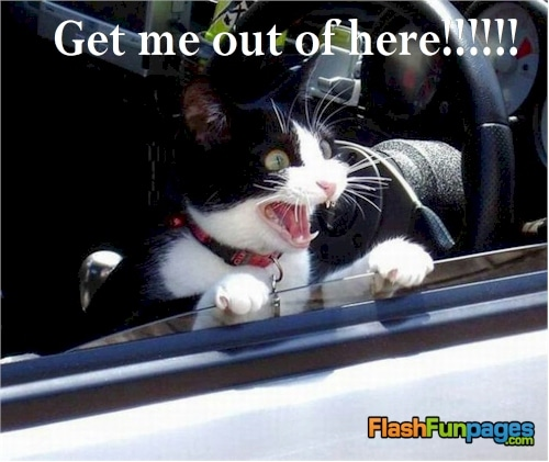 funny-cat-picture-get-me-out