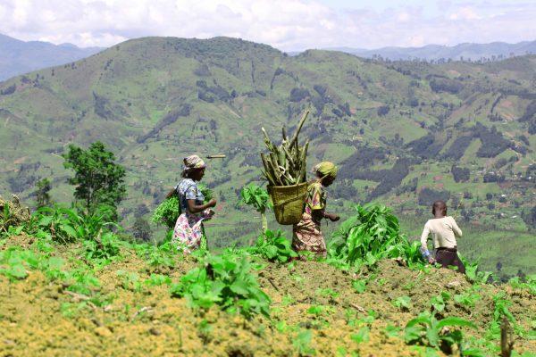 Sud-Kivu  : L'ong UEFA donnera jusqu'à 50 hectares de terres aux autochtones batwa des alentours du PNKB en 2021.