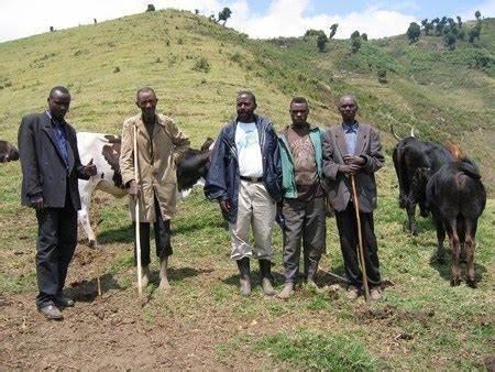 Tanganyika : Les cultivateurs alertent sur un enjeu explosif possédé par sujet Munyamulenge