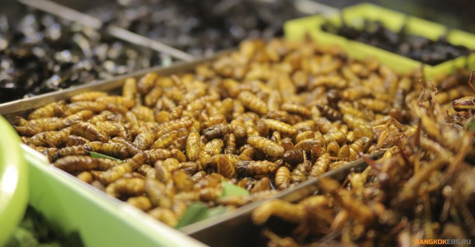 Личинки насекомых в таиланде