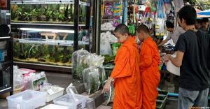 Шоппинг на рынке выходного дня Чатучак в Бангкоке. Птичий рынок
