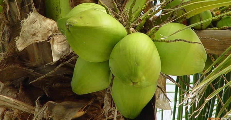 Кокосы - coconuts