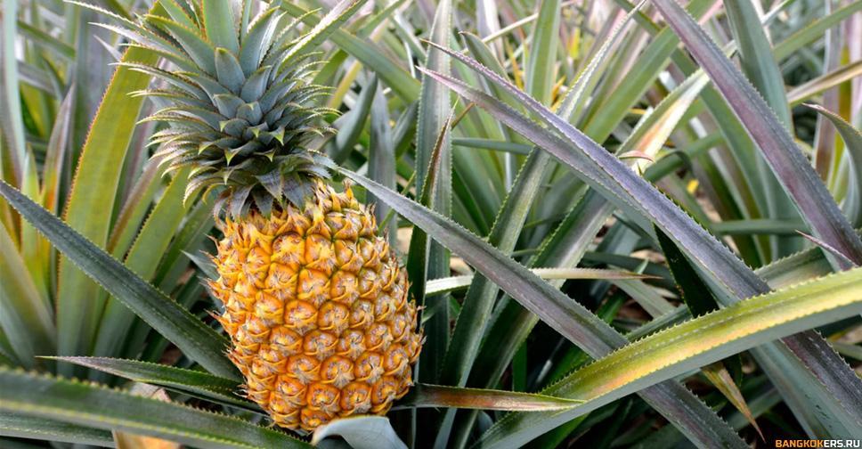 Ананас - pineapple