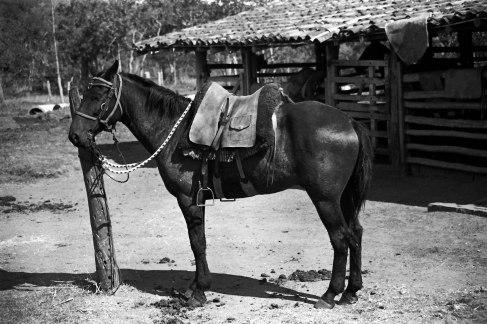 _91-Brasilien-Pferd