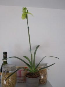 Paph full view