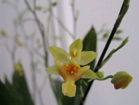 Surprise! A yellow bloom.