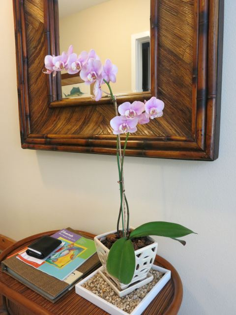 Our Ocean House room orchid