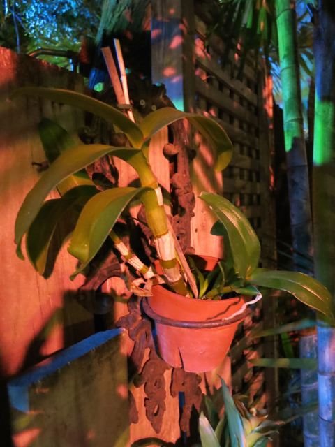 Dendrobium at Blue Heaven